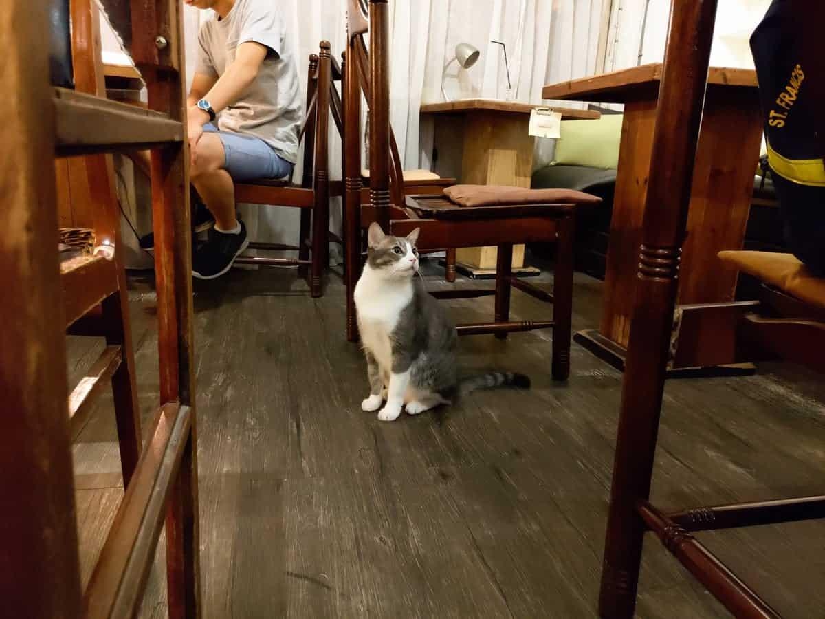 只是光影 獨立咖啡廳2樓-貓